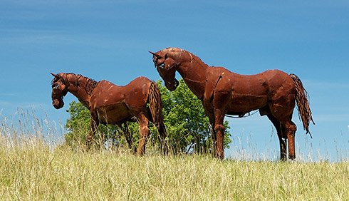 Windy Knoll Horses