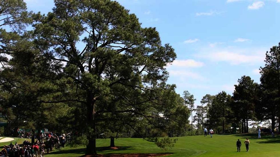 Eisenhower Tree