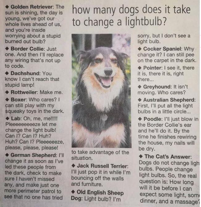 Dogs-bulb.jpg