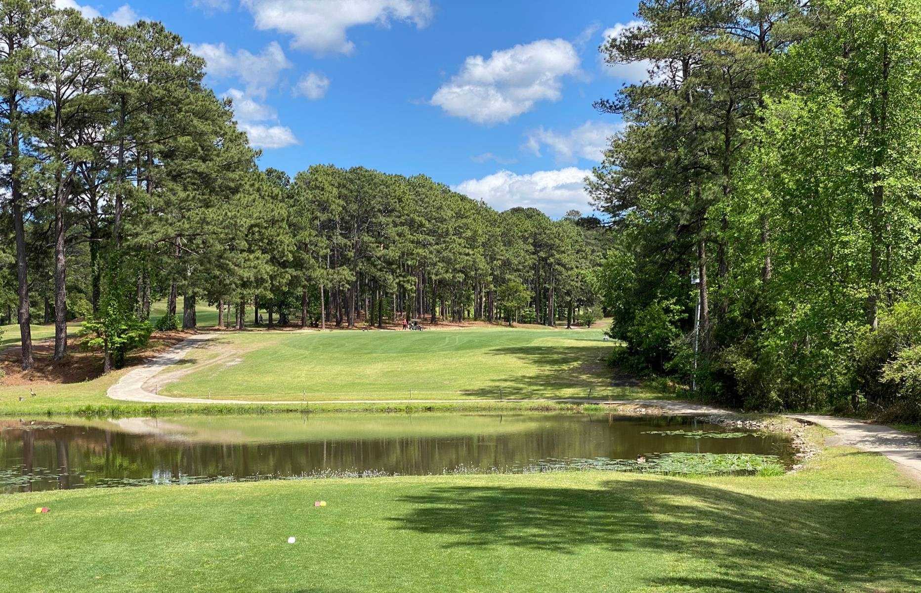 Southern Pines #6
