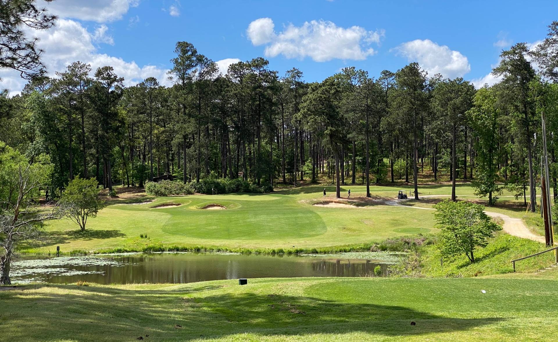 Southern Pines #9
