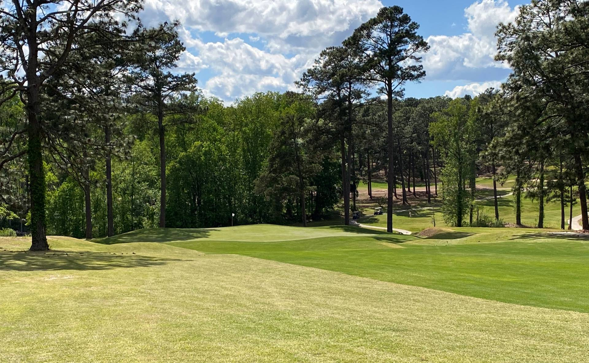 Southern Pines #13