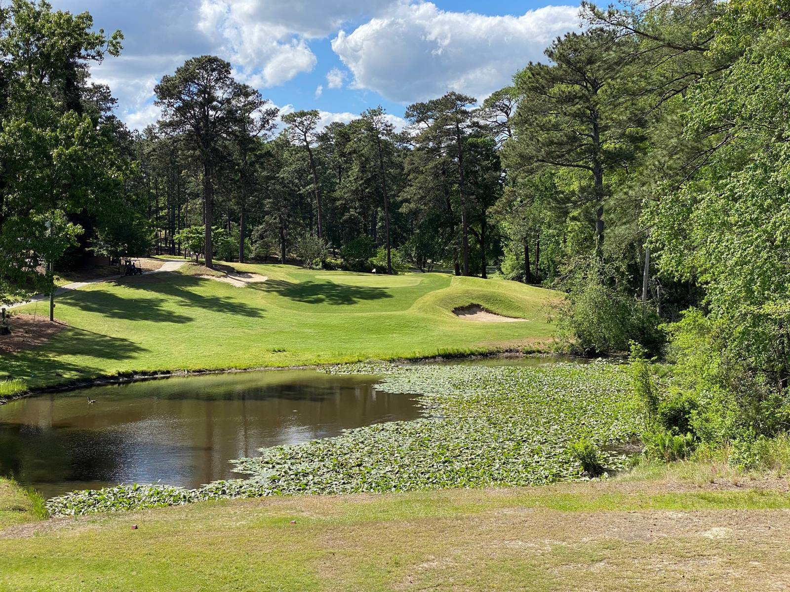 Southern Pines #14