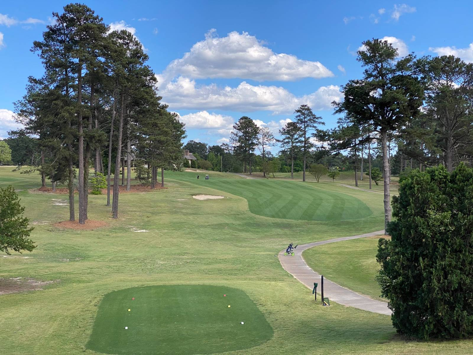 Southern Pines #18