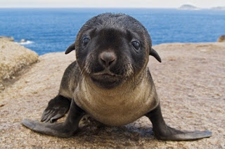sealpuncher