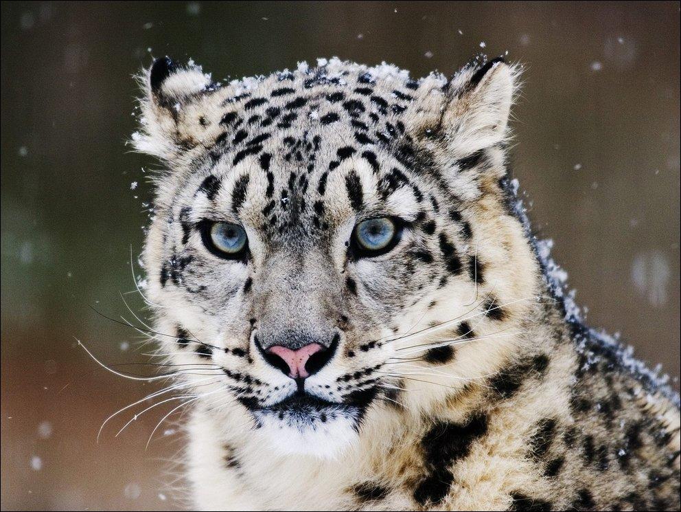 Bigcats82