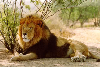 SouthernLion
