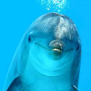Dolphinswin