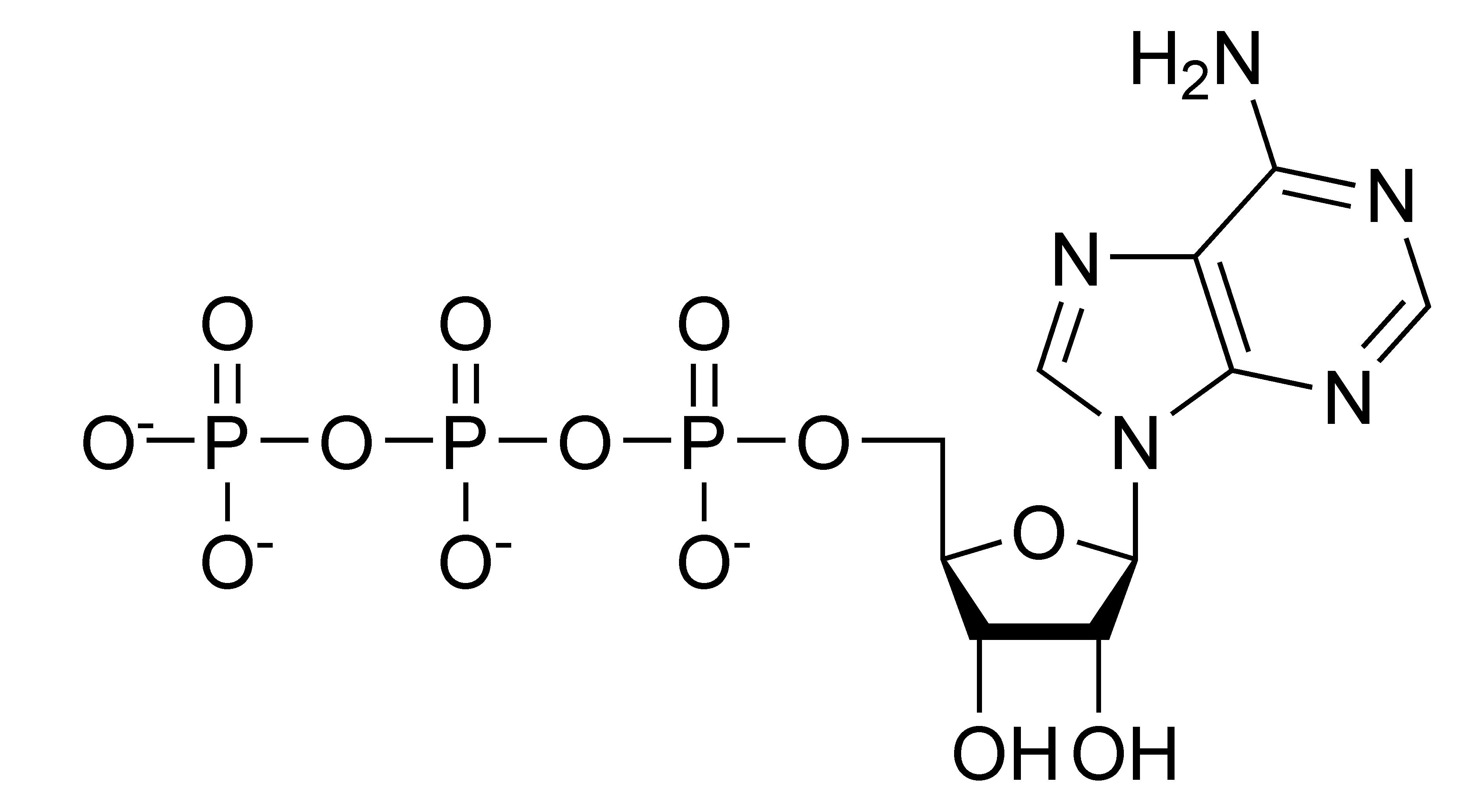 bnz506